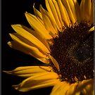Sunflower by ReidOriginals