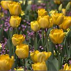 Yellow Tulips by ReidOriginals
