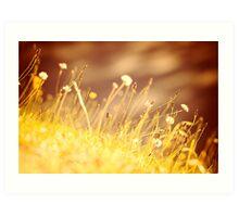Sunset Grass Art Print