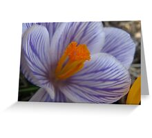 Precious crocus Greeting Card