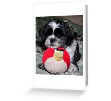 Gracie Today Greeting Card