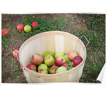Apple Picking Poster