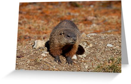 How Much Wood Could a Wood Chuck Chuck by Richard Lee