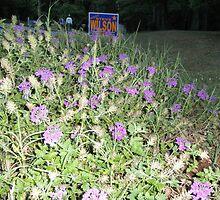Pretty Purple flower by ack1128