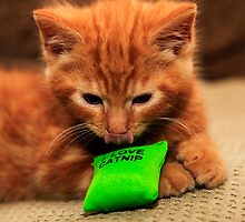 I Love Cat Nip by Paul Knowles