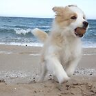 Border Collie Puppy on the Beach by Siti Studio