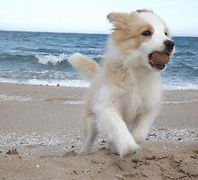 Border Collie Puppy on the Beach by dedakota