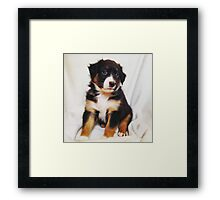 Australian Shepherd Puppy Fire Framed Print