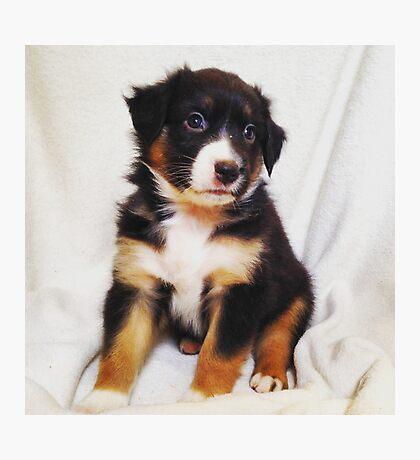 Australian Shepherd Puppy Fire Photographic Print