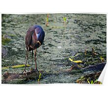 Blue Heron At Breakfast Poster