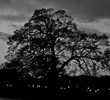 The Shade Tree by Jaysen Edgin