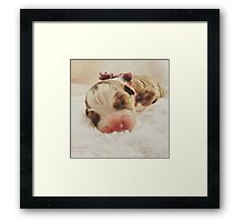 Australian Shepherd Sleeping Beauty Framed Print