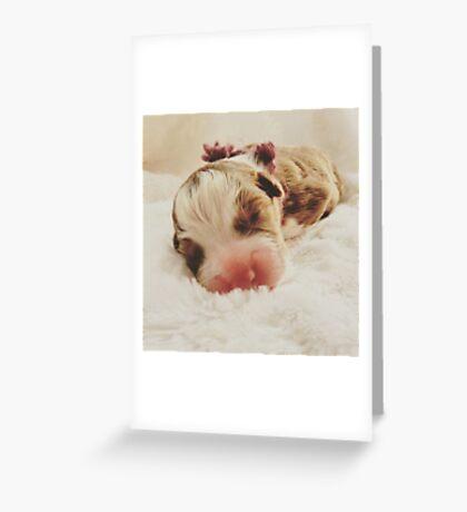 Australian Shepherd Sleeping Beauty Greeting Card