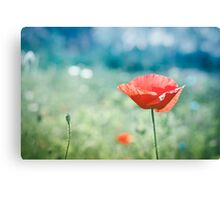 Poppy in green and blue field 2 Canvas Print