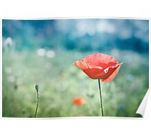 Poppy in green and blue field 2 Poster