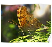 An exclamation in this Eastern Comma Polygonia Poster