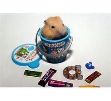 Orange Pudding Hamster Photographic Print
