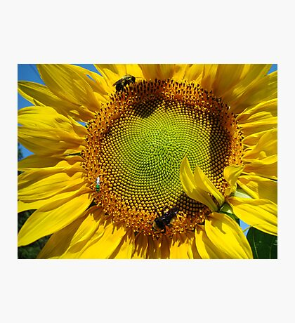 The Insect Feast Photographic Print