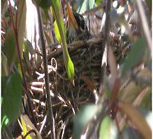 Bird In Nest Poster by CodysPhotos