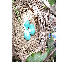 Robins Eggs Photographic Print