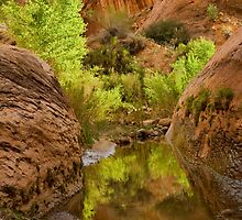 Willow Gulch by Kim Barton