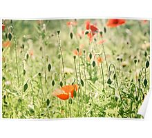 Poppies in summer green Poster