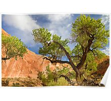 Willow Gulch Cottonwood Poster