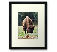 Unwelcome Guest Framed Print