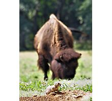 Unwelcome Guest Photographic Print