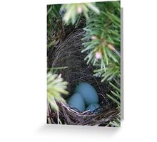 Bird Nest Greeting Card