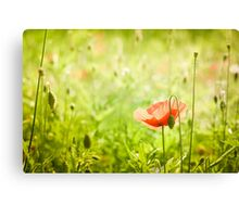 Poppy in summer green  Canvas Print
