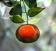 Grunge Mandarin by alycanon