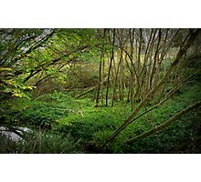 Hidden Glade in Basket Range Photographic Print