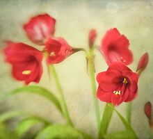 Red Blooms by Suzanne Cummings