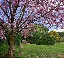 Cherry blossom time by Celeste Mookherjee