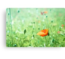 Poppy in bright green field  Canvas Print
