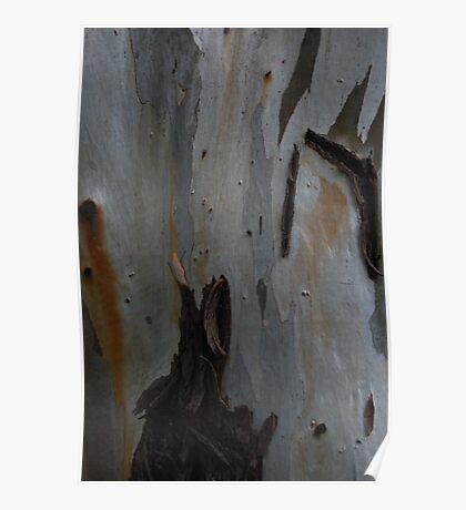 Bark of eucalyptus Poster