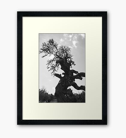 Lord of the rings tree Framed Print
