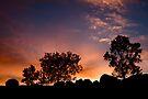 Ulandra Reserve Sunrise #3 by Rosalie Dale