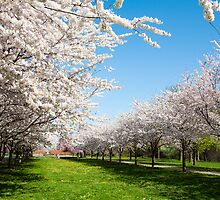 Blossoms Row by Eric Tsai