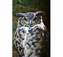 The Great Horned Owl Photographic Print