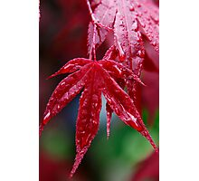 Wet Acer  Photographic Print