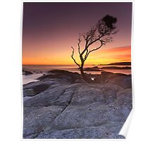 """That Tree"" ∞ Binalong Bay, Tasmania - Australia Poster"