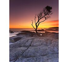 """That Tree"" ∞ Binalong Bay, Tasmania - Australia Photographic Print"