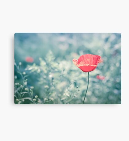 Poppy in blue dream Canvas Print