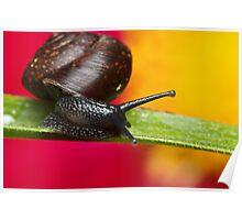 Tiny Snail Poster