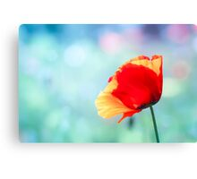 Disco poppy Canvas Print