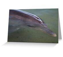 Dolphin - Monkey Mia - WA Greeting Card