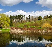 Spring Reflection Landscape by Christina Rollo