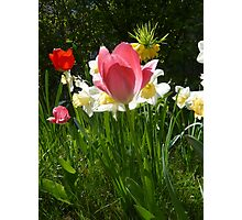 My garden in spring Photographic Print